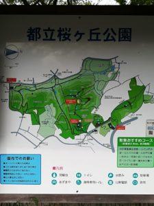 桜ヶ丘公園1