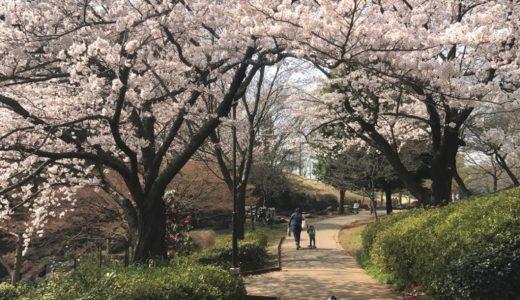 横浜市鶴見区・港北区・青葉区の桜(お花見)がおすすめの公園3選