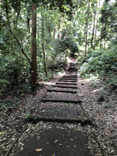 茅ヶ崎里山公園31
