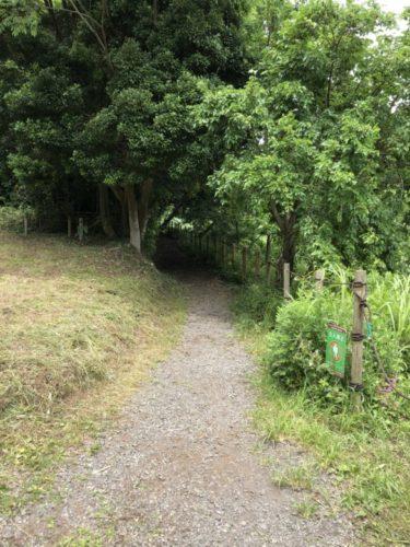 茅ヶ崎里山公園30