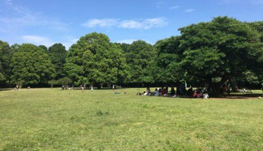 川崎|東高根森林公園で森林浴♪野鳥を探そう!!広大な芝生でボール遊び♪遊具もあるよ!