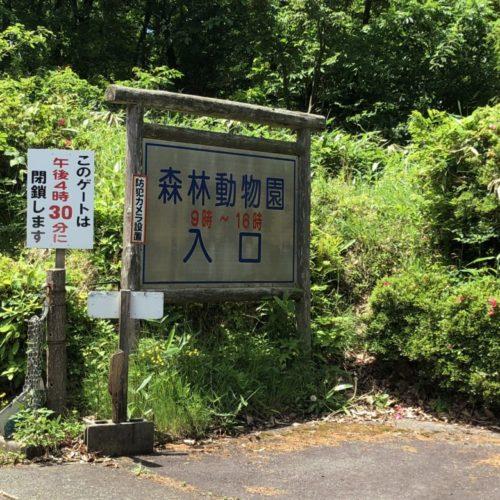 森林公園39