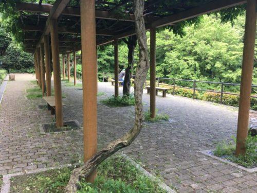 東高根森林公園12