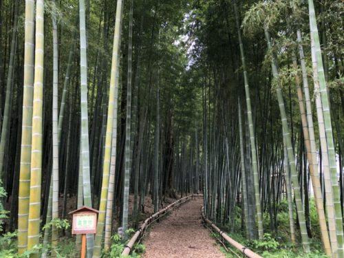 茅ヶ崎里山公園21