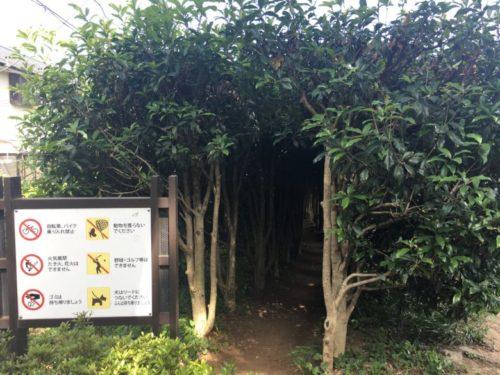 東高根森林公園7