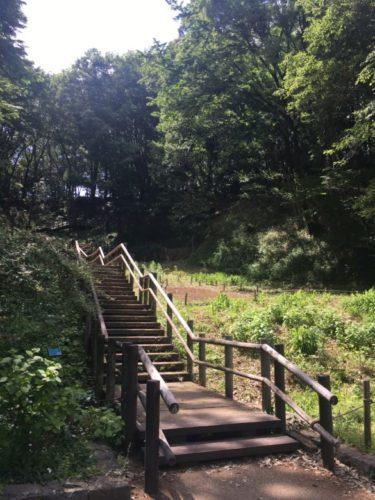 東高根森林公園11
