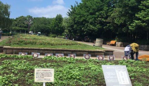 藤沢|長久保公園都市緑化植物園|巨大迷路に挑戦!ボール遊びもOK♪桜も見事です!!
