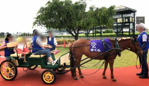 中京競馬場「馬場内遊園地」公園駐車場は?豊富な遊具とポニーふれあい体験もできるよ♪