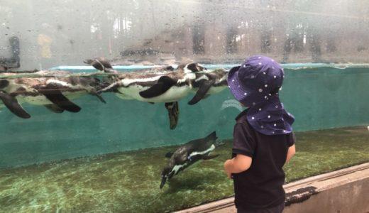 川崎市「夢見ヶ崎動物公園」は無料で動物が観れる!遊具遊び|桜スポット
