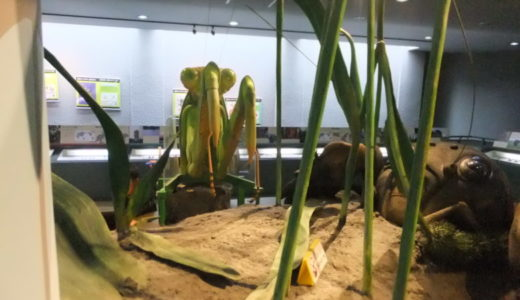 奈良県「橿原市昆虫館」でカブトムシに触れよう!裏名物ゴキブリも・・・