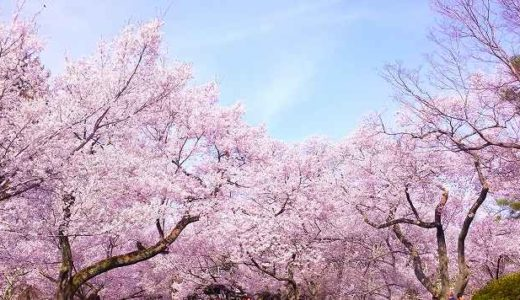 神奈川県平塚市・寒川町・二宮町の桜(花見)がおすすめの公園3選