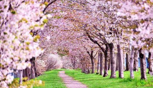 神奈川県川崎市の桜(花見)がおすすめの公園2選