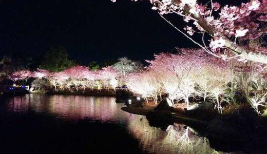 鎌倉市・横須賀市・逗子市の桜(お花見) がおすすめの公園4選
