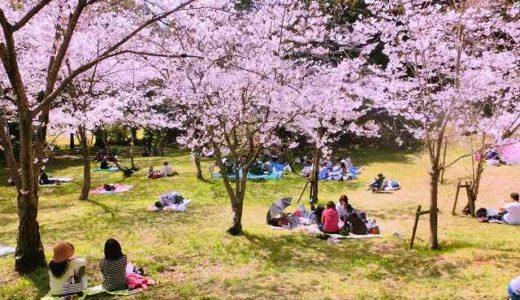 神奈川県箱根町・小田原市・山北町の桜(花見)がおすすめの公園4選