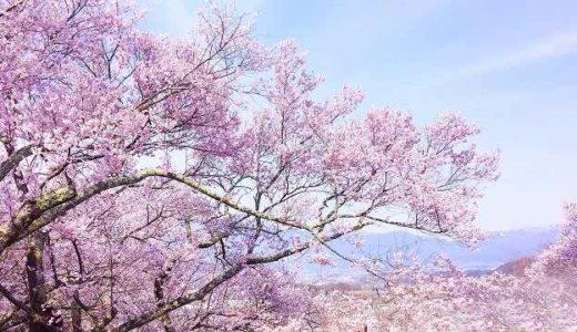 横浜市西区・神奈川区・中区の桜(お花見)がおすすめの公園5選